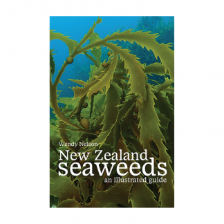 New Zealand Seaweeds, an Illustrated Guide