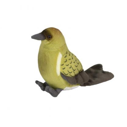 Native NZ Bird Bellbird Korimako