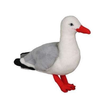 Native NZ Bird Seagull