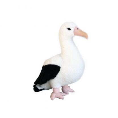 Native NZ Bird Albatross