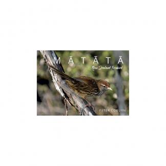 Mātātā New Zealand Fernbird